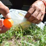 Cualquier recipiente que acumule agua favorece la cria del mosquito transmisor
